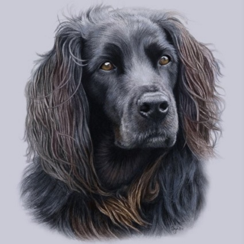 Dog Portraits